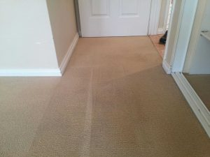 carpet dry cleaning perth after